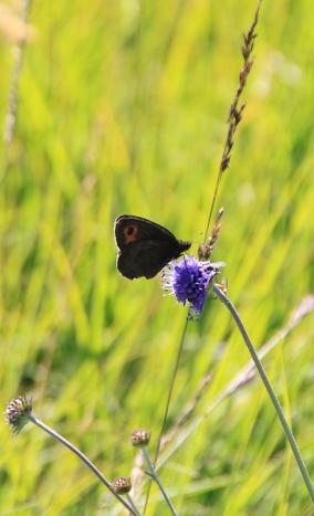 Die Schönheit im Detail - Taynish National Nature Reseve