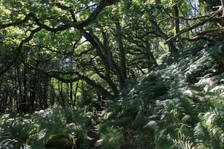 Und die Schönheit im Wald.