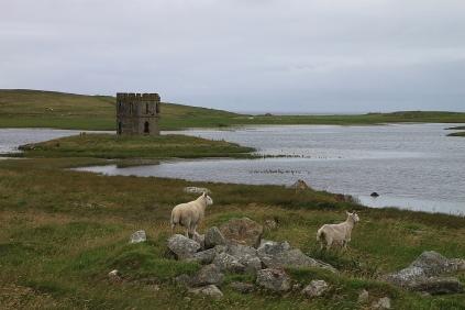Scolpaig Tower und Schafe mit Fernweh